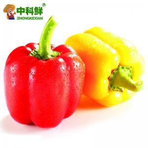 【中科鮮】精選彩椒500g  (僅限北京天津發貨,蔬菜總量8份起訂)
