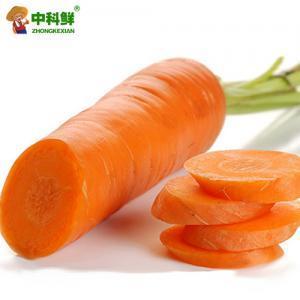 【中科鮮】胡蘿卜500g 紅胡蘿卜  (僅限北京天津發貨,蔬菜總量8份起訂)