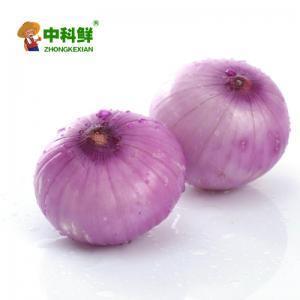 【中科鮮】紫洋蔥/蔥頭500-550g  (僅限北京天津發貨,蔬菜總量8份起訂)