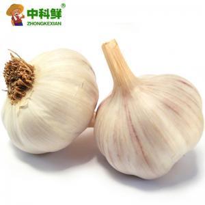 【中科鲜】精品大蒜500g 蒜头  (仅限北京天津发货,蔬菜总量8份起订)