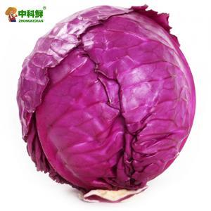 【中科鲜】 紫甘蓝1个装 1200g  (仅限北京天津发货,蔬菜总量8份起订)