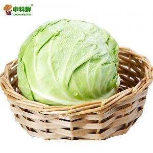 【中科鮮】包菜/綠甘藍 圓白菜 1200g  (僅限北京天津發貨,蔬菜總量8份起訂)