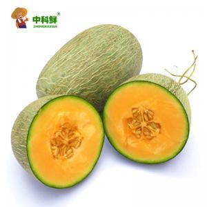 【中科鲜】海南西州哈密瓜/网纹瓜1个装 约2-3斤