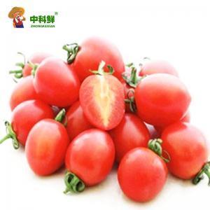 【中科鲜】海南千禧圣女果3斤装  (仅限北京天津发货,蔬菜总量8份起订)