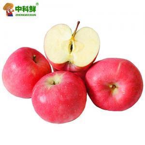 【中科鲜】山东栖霞红富士苹果12斤装