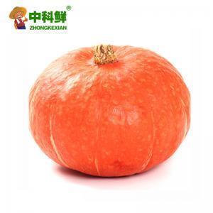【中科鲜】小南瓜 金瓜约1000g  (仅限北京天津发货,蔬菜总量8份起订)