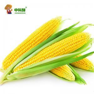 【中科鮮】水果玉米/甜玉米12穗裝  (僅限北京天津發貨,蔬菜總量8份起訂)