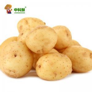 【中科鲜】精选土豆2斤  (仅限北京天津发货,蔬菜总量8份起订)