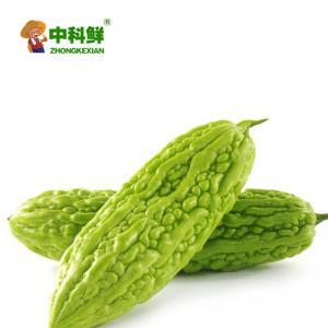 【中科鮮】精選苦瓜500g  (僅限北京天津發貨,蔬菜總量8份起訂)