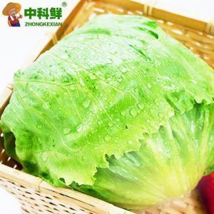 【中科鲜】 精选圆生菜/球生菜500g  (仅限北京天津发货,蔬菜总量8份起订)